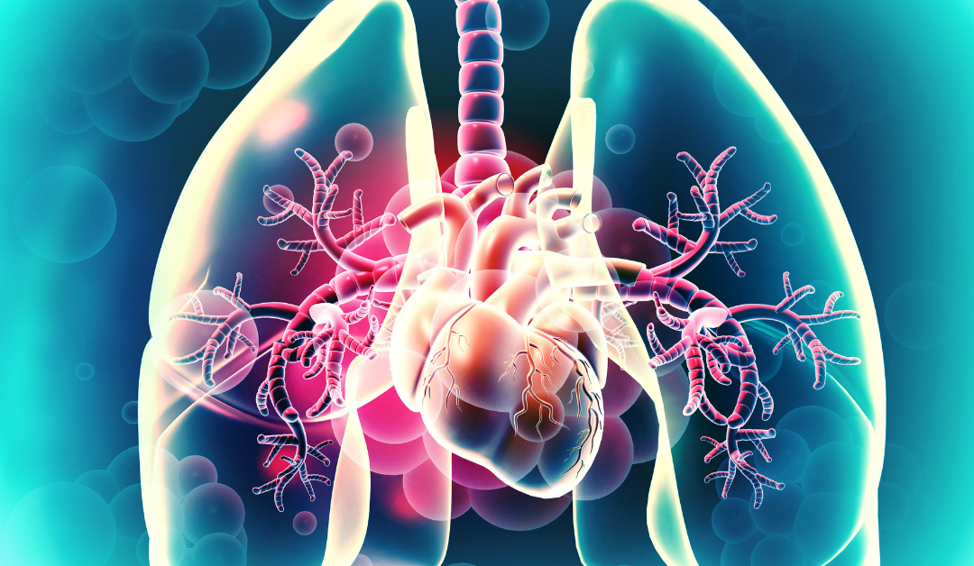 Sistema respiratorio e cardiovascolare: i MOOC di medicina di federica.eu